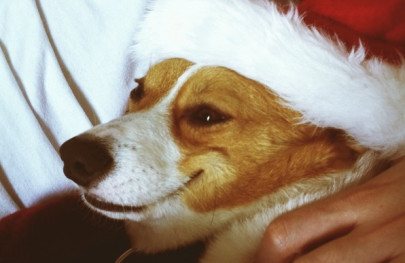 christmas dog by nate howe
